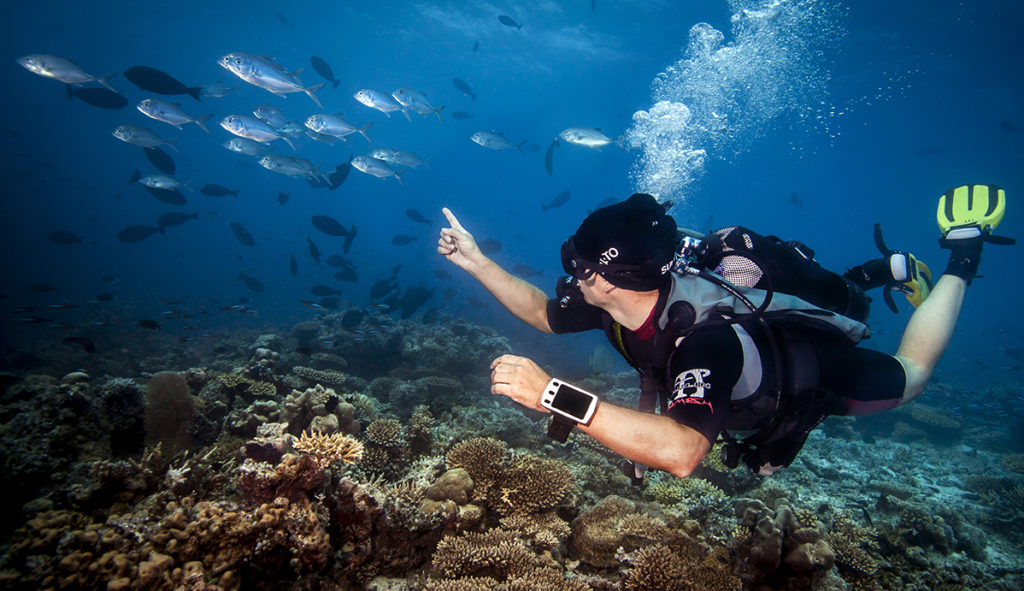 Diver underwater pointing at a school of fish